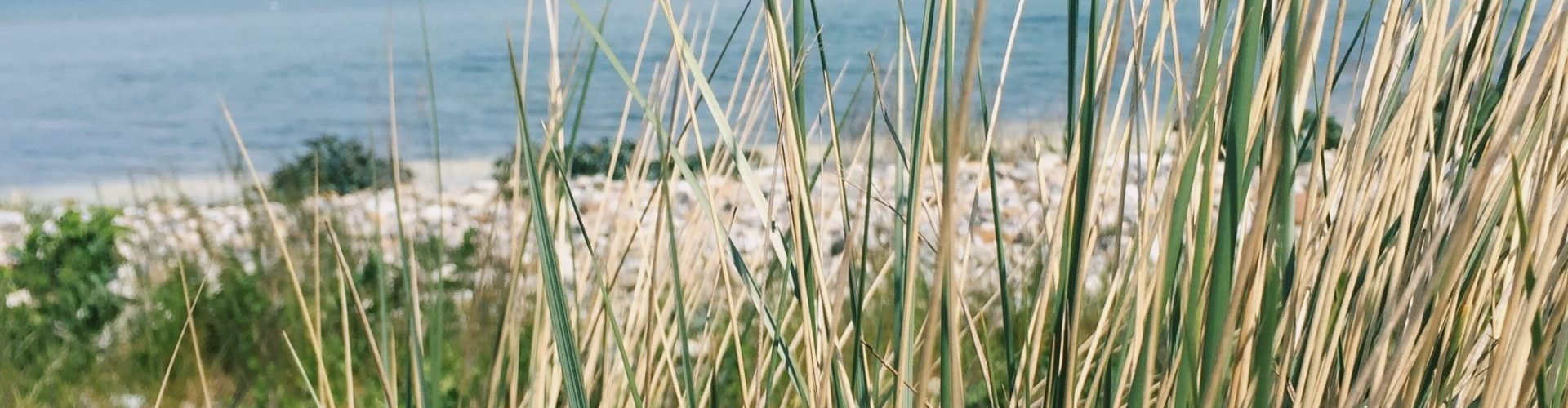 green grass on shore during day